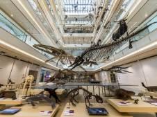 matteo-de-stefano-muse-museo-delle-scienze.mb.0006ci